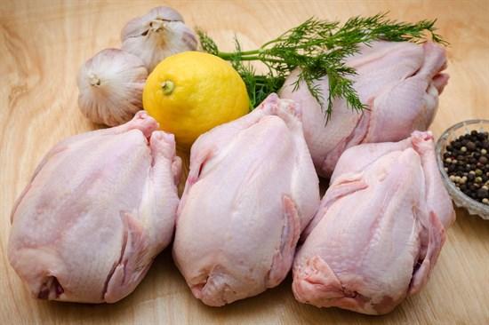 Цыпленок корнишон - фото 5027